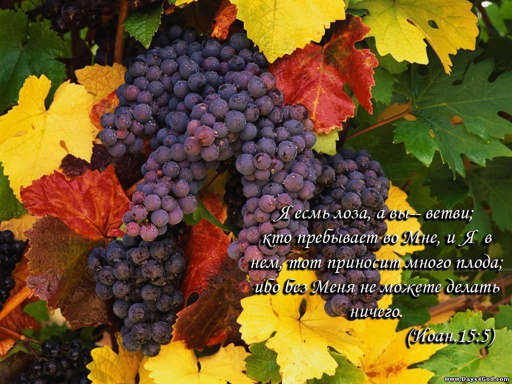 3 сентября день винограда стихи развитие